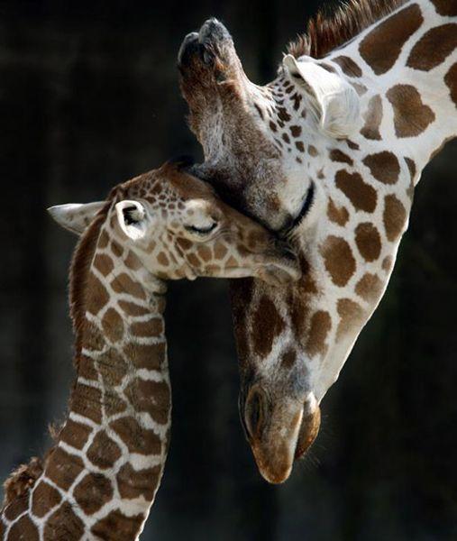 Симпатичные животные показывают свои чувства (30 фото)