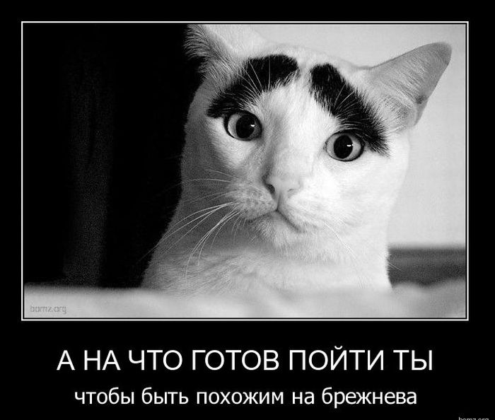 http://de.trinixy.ru/pics4/20110131/demotivatory_06.jpg