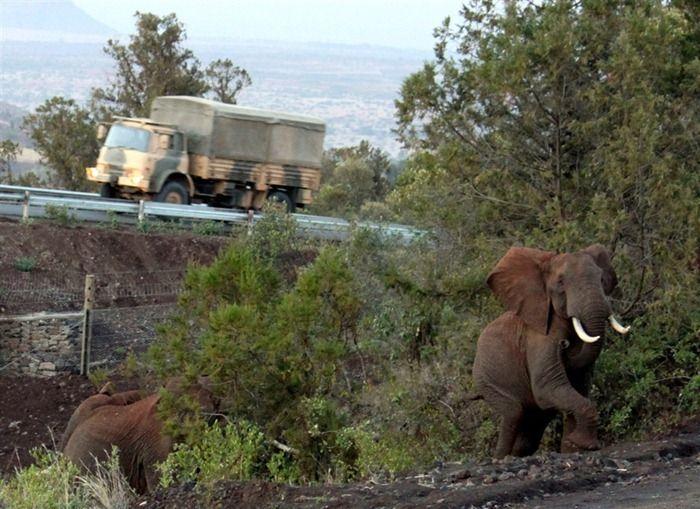 Подземный переход для слонов (4 фото)