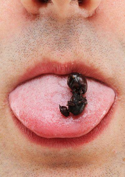 Гигантские муравьи (3 фото)