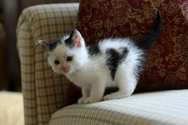 Коты с сердечками (20 фото)