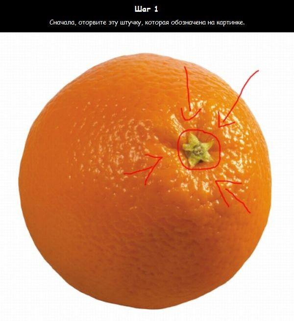 http://de.trinixy.ru/pics4/20110202/orange_02.jpg