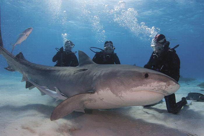 Акулы (15 фото)