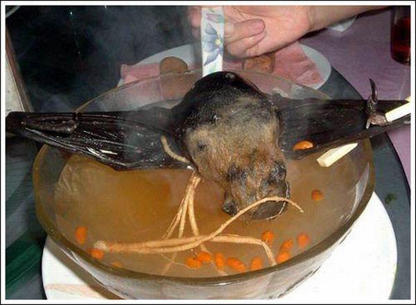 Суп из летучих мышей (11 фото)