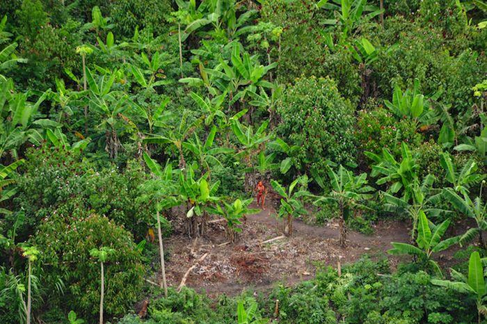 В Бразилии найдено еще одно неизвестное ранее племя (6 фото)