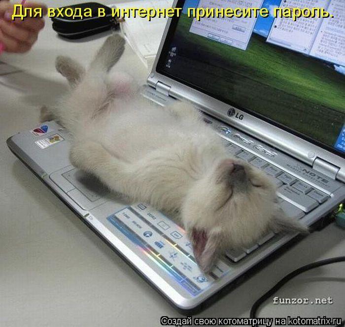 ...котенок...  Раскудахтались - Да просто в доме больше