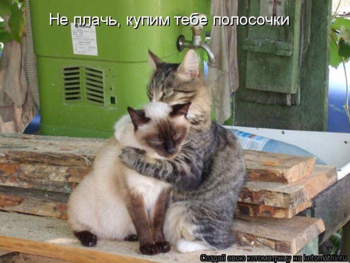 смотреть приколы про кошек картинки с надписями.