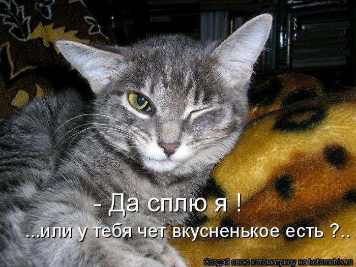 Улыбнись!!животные,птицы и другой животный мир)) Kotomatrix_38