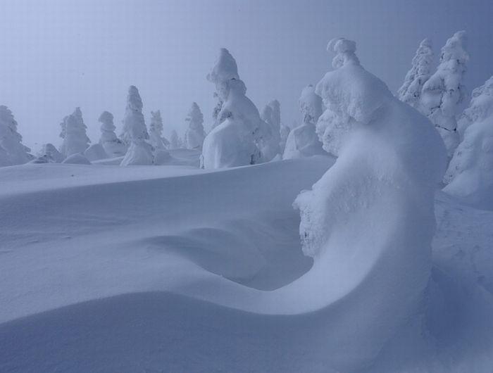 Японские снежные монстры