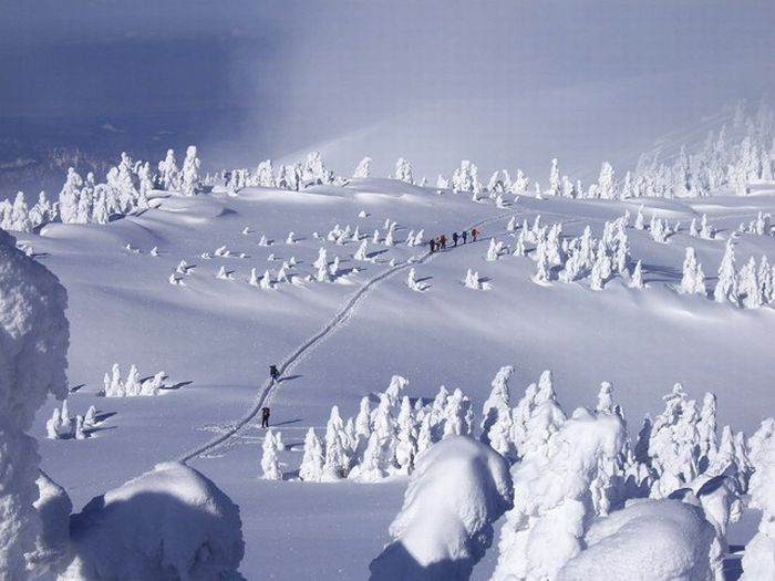 Все в снегу (25 <br />фото)