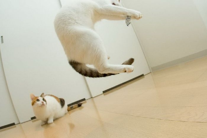 Летающие коты (37 фото)
