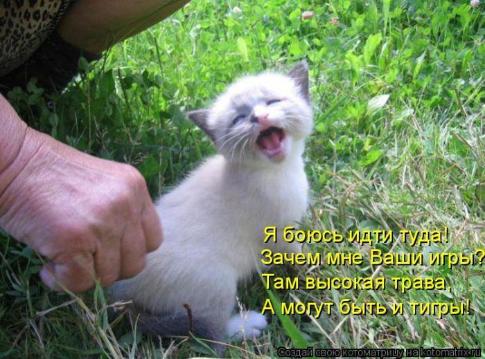 Прикольные надписи на картинках с животными 6. Прикольные надписи на картинках с животными 7.