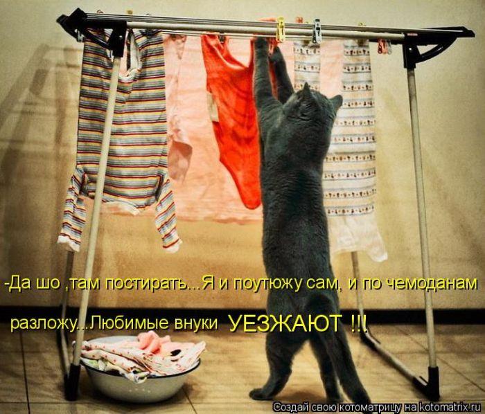 Нравится Поделиться. котэ. кошка. котята.  Сохранить как ссылку.