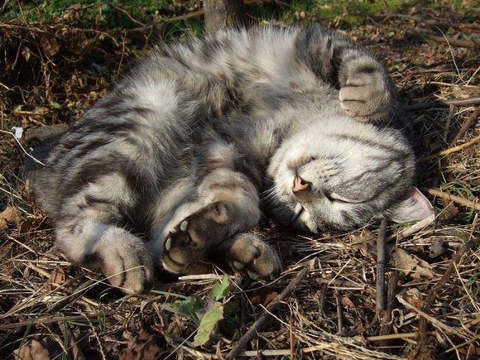 Нельзя убивать незнакомых людей, вдруг у них котик дома один.