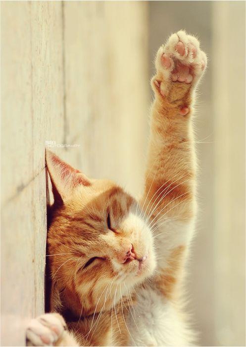 Прикольные Коты.  Всем, спокойной ночи!  14 Января 2012 в