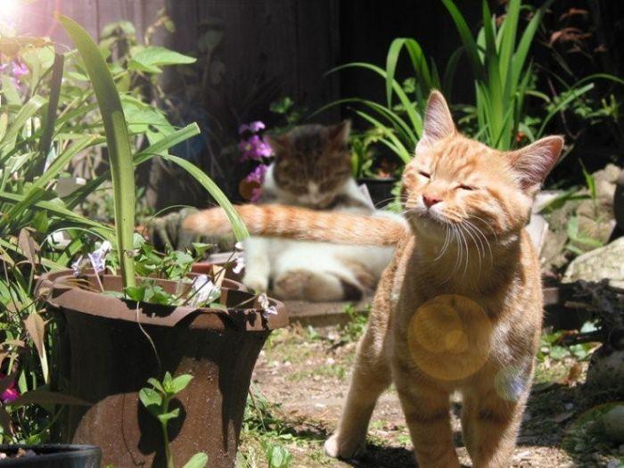 Кошки (136 фото)