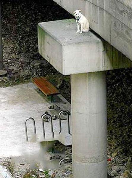 Собачьи неудачи (33 фото)