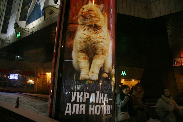 http://de.trinixy.ru/pics4/20110215/podborka_33.jpg