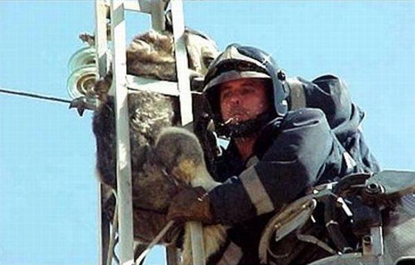 Спасательная операция (6 фото)