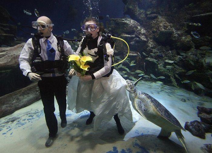 Свадьба среди черепах (6 фото)