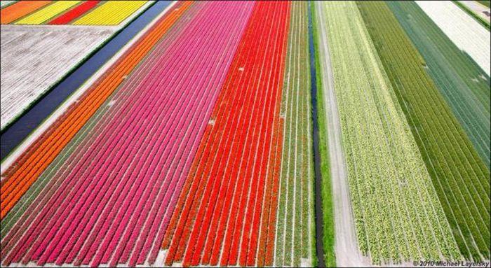 Поля тюльпанов (32 фото)