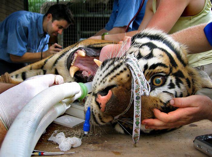 Животные на приеме у стоматолога (14 фото)
