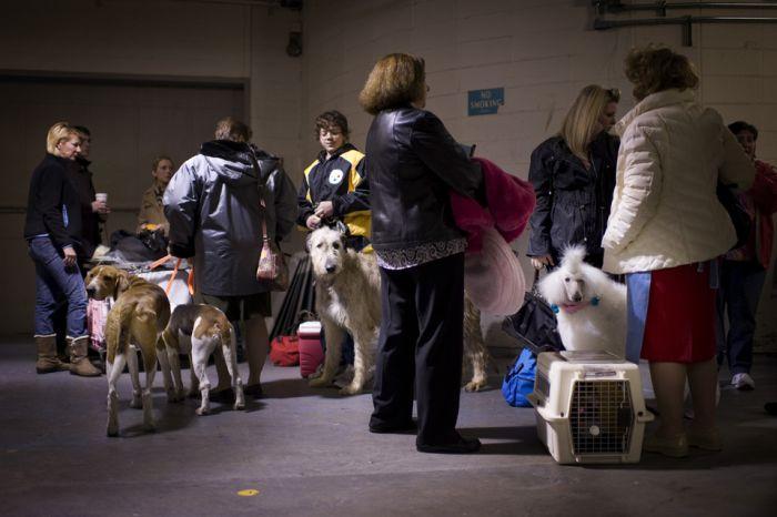 Один день из жизни собаки по имени Инге (12 фото)