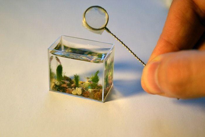 Самый маленький аквариум в мире (6 фото)