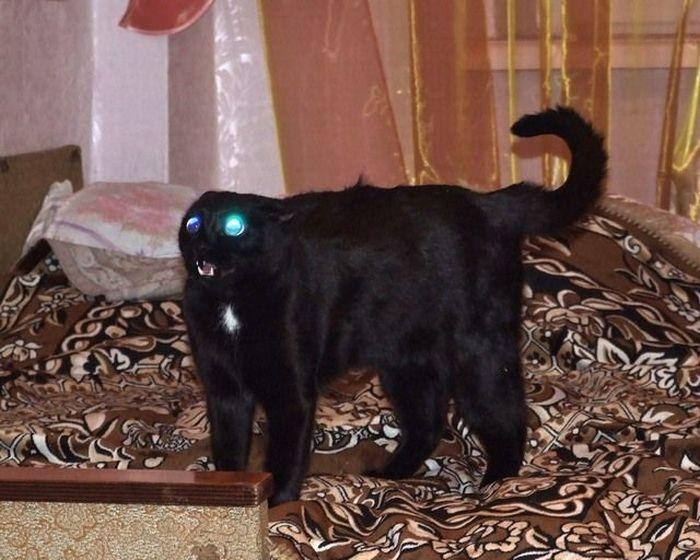 Злые коты (17 фото)