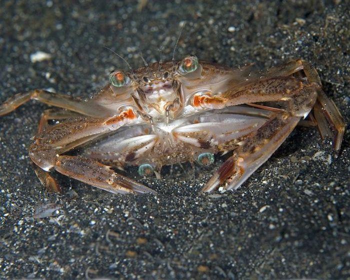 Красоты подводного мира (38 фото)
