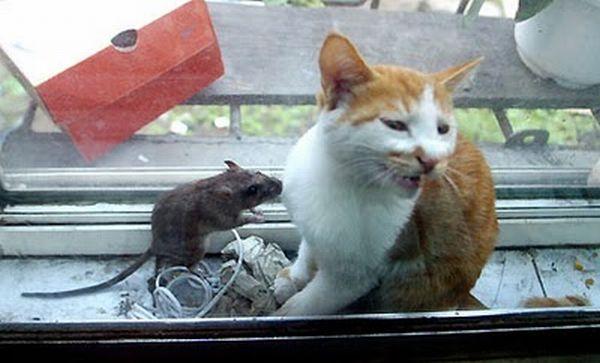 Кот и мышка (6 фото)