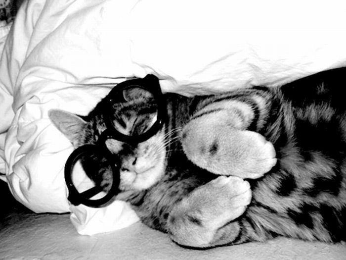 Коты в очках (25 фото)