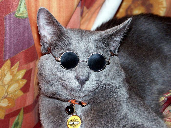 Девушки в очках B-) (34 ФОТО)