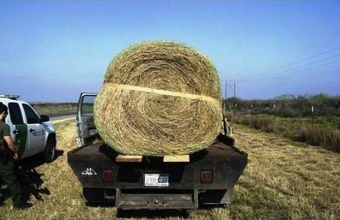 Предприимчивый фермер (4 фото)