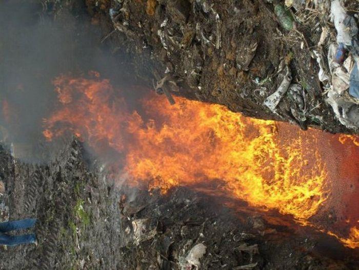Как горит красная икра (24 фото)