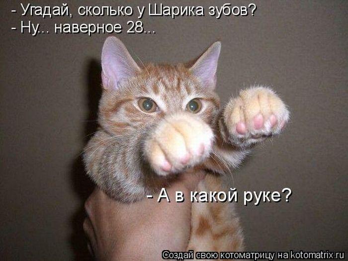 http://de.trinixy.ru/pics4/20110304/kotomatrix_18.jpg