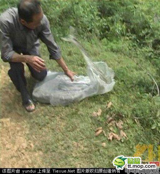 Ловец змей - профессия опасная (7 фото)