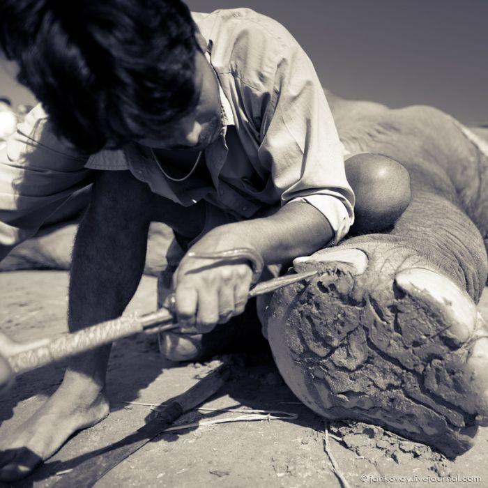 Маникюр для слона (5 фото)