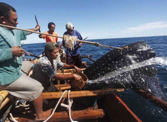 Рыбалка в Индонезии (23 фото)