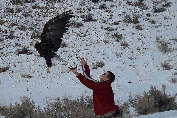 Орел против лобового стекла (2 фото)