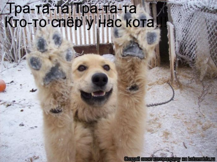 давайте посмеемся - Страница 5 Kotomatrix_11