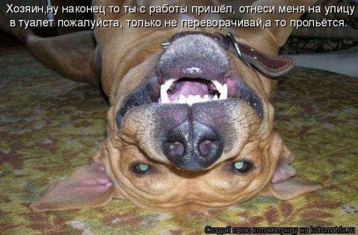 Веселые фотографии из сети - Страница 9 Kotomatrix_19