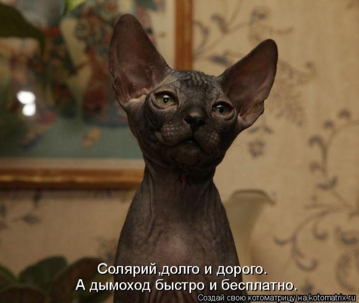 Продаются котики-донские сфинксы, черные и зеленоглазые.  2 месяца.