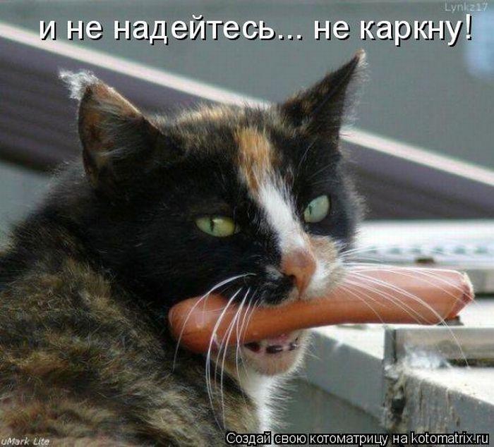 давайте посмеемся - Страница 5 Kotomatrix_44