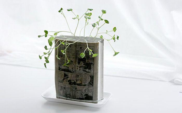 Необычный вазон для цветка (7 фото)