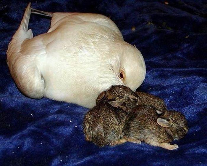 Семья для кроликов (4 фото)