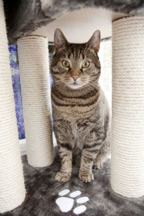 Пятизвездочный отель для кошек (29 фото)