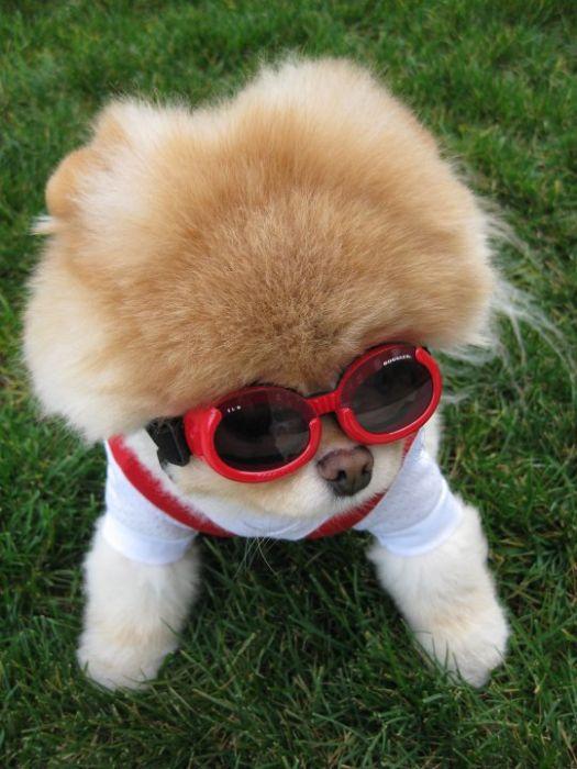 Бу собака которая всем нравится 50