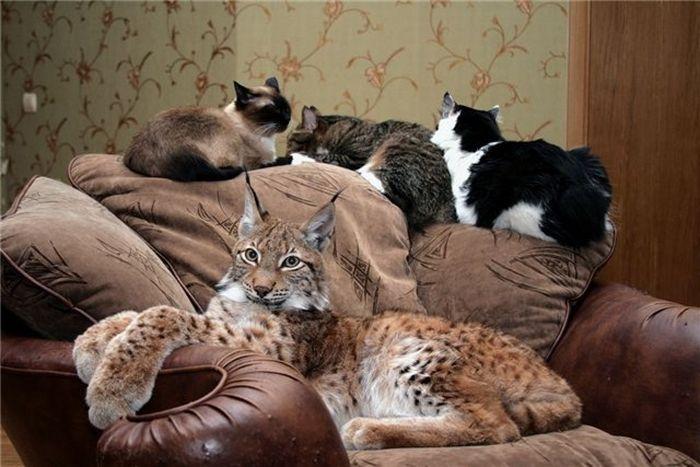 Дикие домашние животные (68 фото)