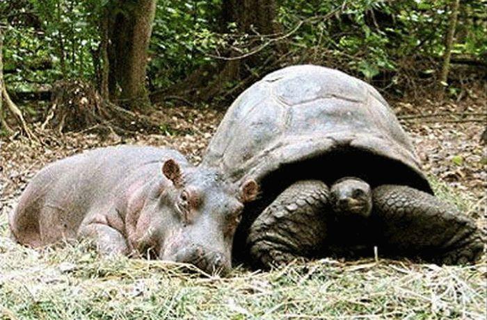 Нежная дружба разных животных (62 фото)